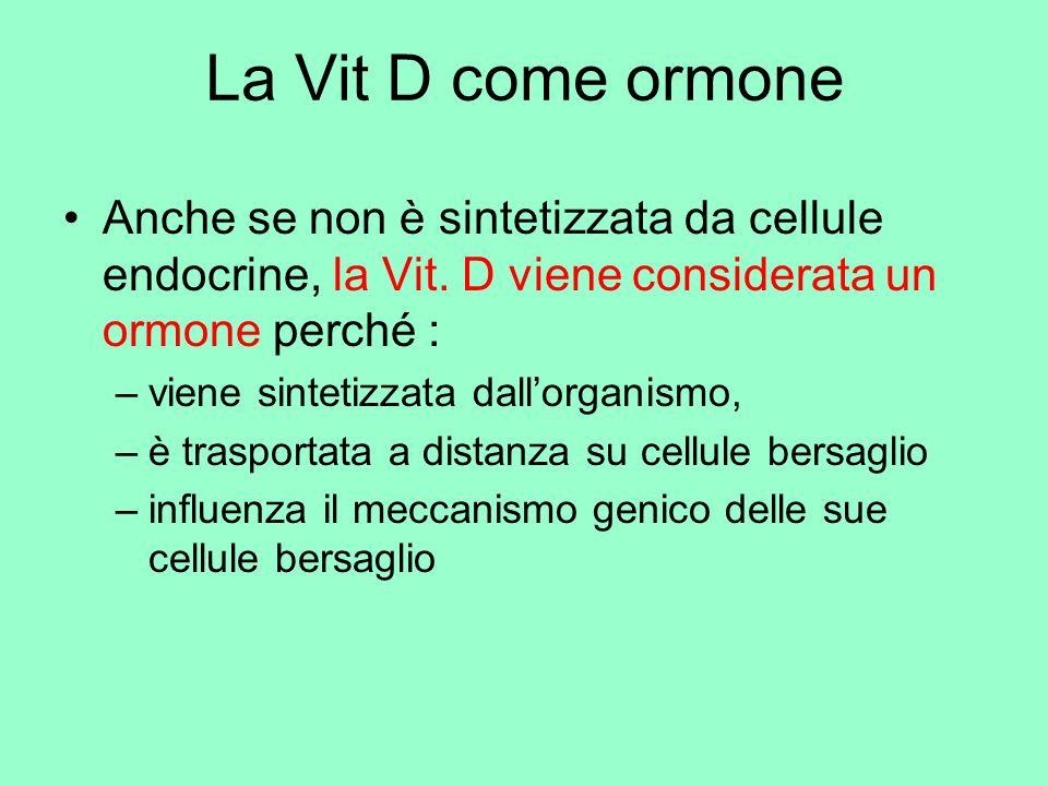 La Vit D come ormone Anche se non è sintetizzata da cellule endocrine, la Vit. D viene considerata un ormone perché :