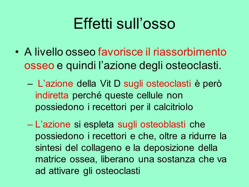 Effetti sull'osso A livello osseo favorisce il riassorbimento osseo e quindi l'azione degli osteoclasti.