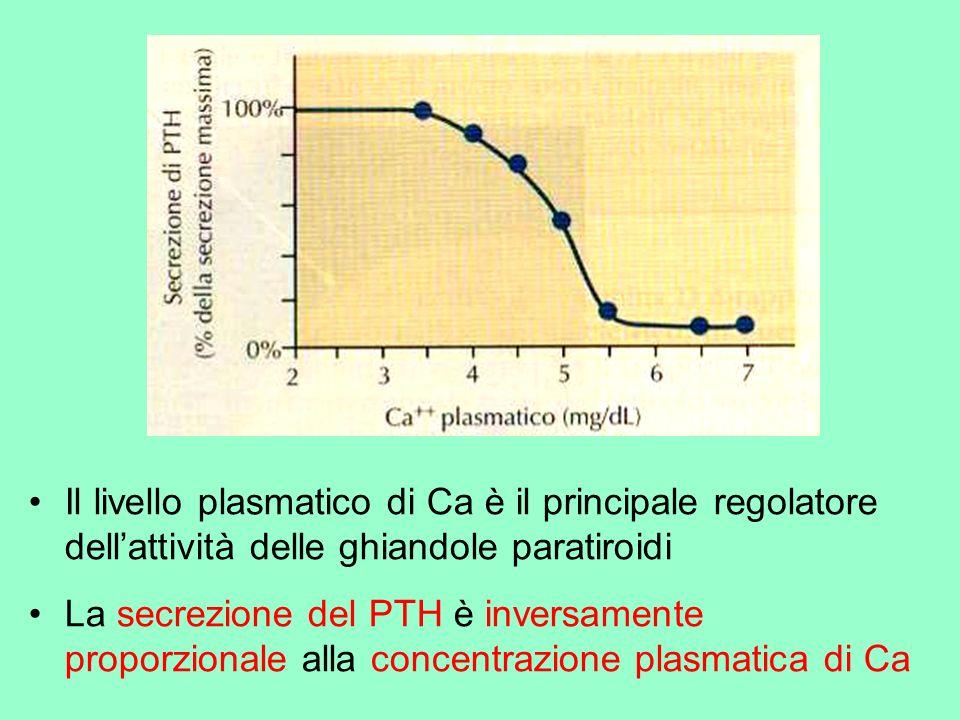 Il livello plasmatico di Ca è il principale regolatore dell'attività delle ghiandole paratiroidi