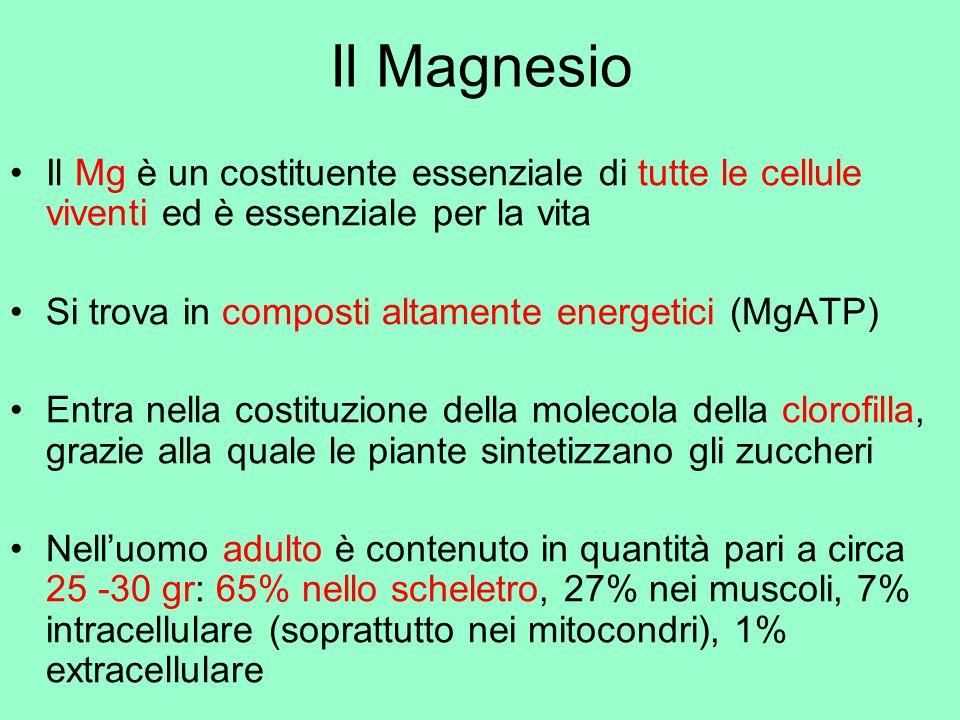 Il Magnesio Il Mg è un costituente essenziale di tutte le cellule viventi ed è essenziale per la vita.