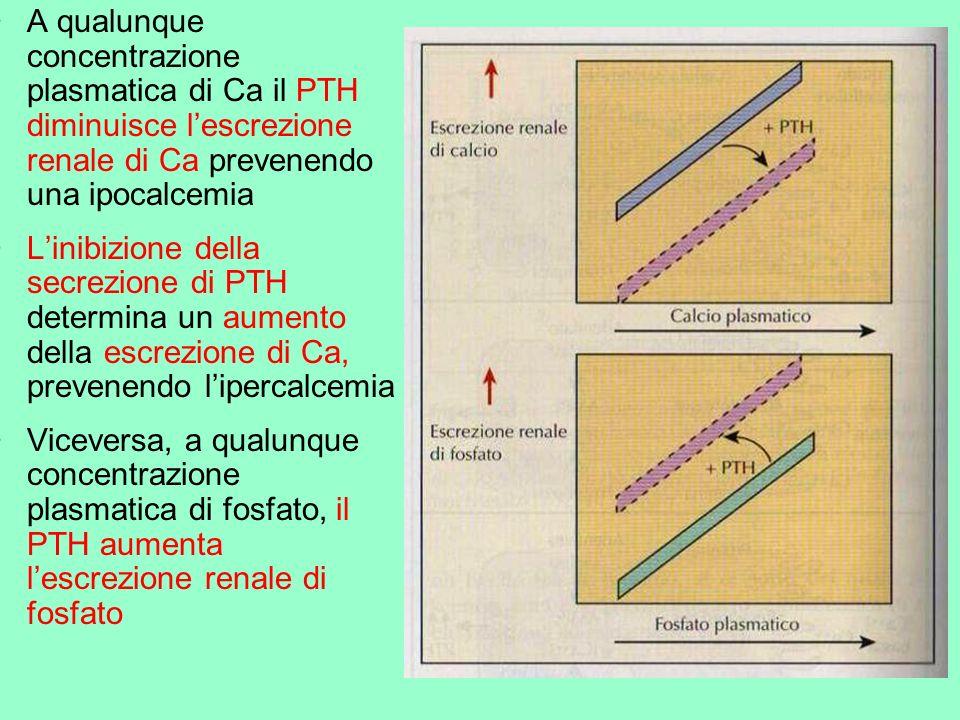 A qualunque concentrazione plasmatica di Ca il PTH diminuisce l'escrezione renale di Ca prevenendo una ipocalcemia