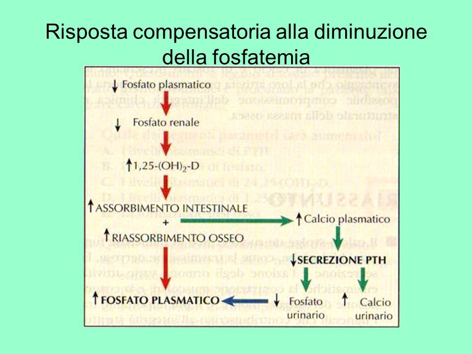 Risposta compensatoria alla diminuzione della fosfatemia