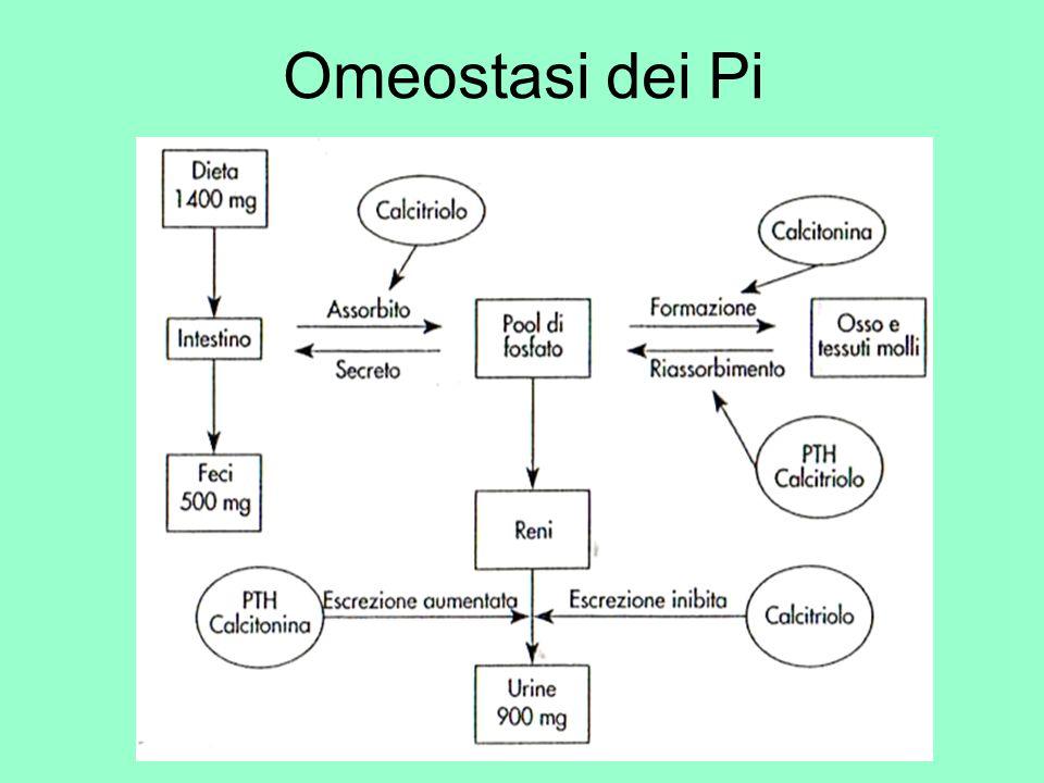 Omeostasi dei Pi