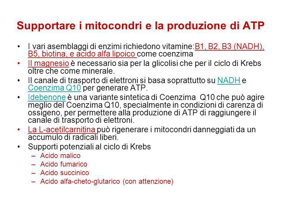 Supportare i mitocondri e la produzione di ATP