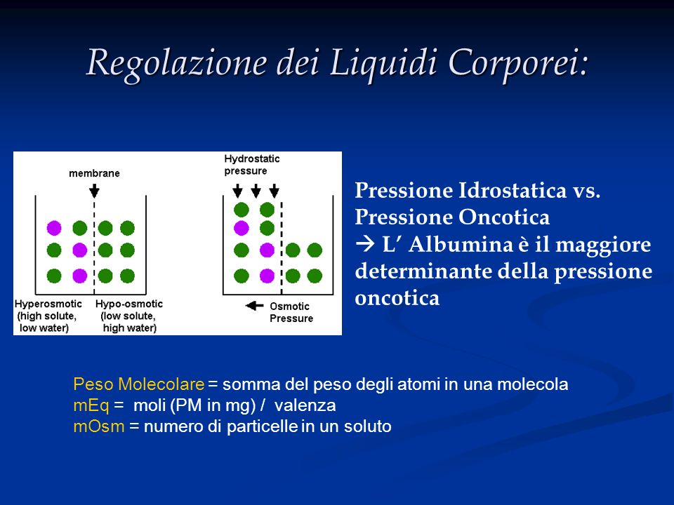Regolazione dei Liquidi Corporei: