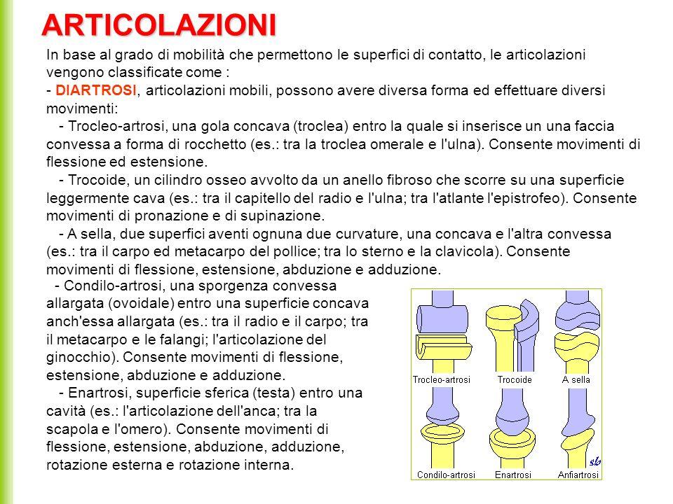ARTICOLAZIONI In base al grado di mobilità che permettono le superfici di contatto, le articolazioni vengono classificate come :