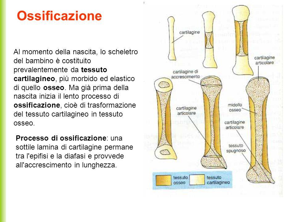 Ossificazione