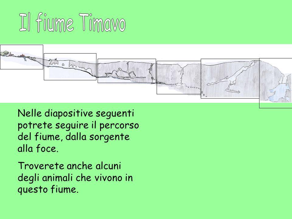 Il fiume Timavo Nelle diapositive seguenti potrete seguire il percorso del fiume, dalla sorgente alla foce.