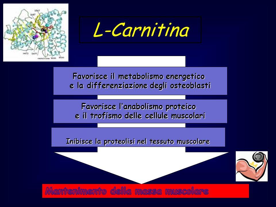 L-Carnitina Mantenimento della massa muscolare