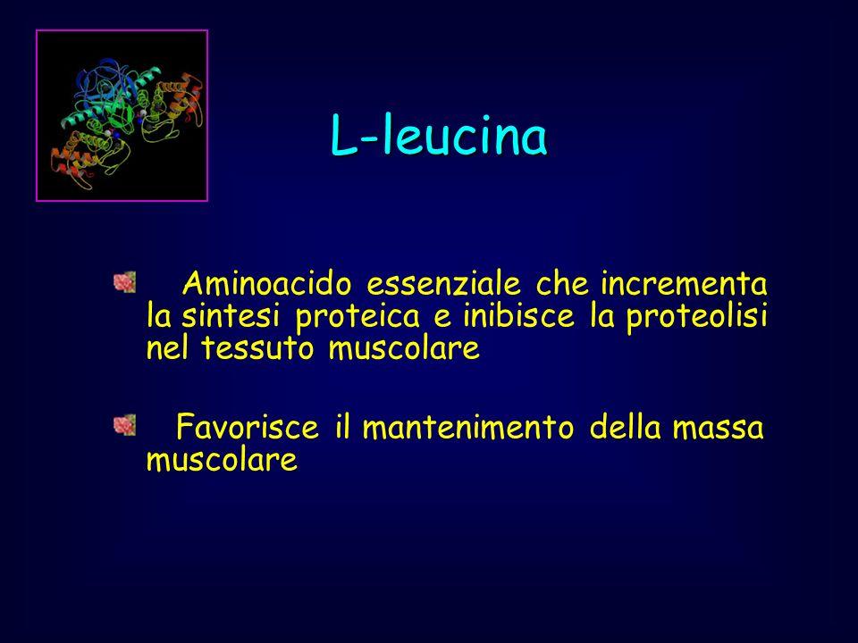 L-leucina Aminoacido essenziale che incrementa la sintesi proteica e inibisce la proteolisi nel tessuto muscolare.