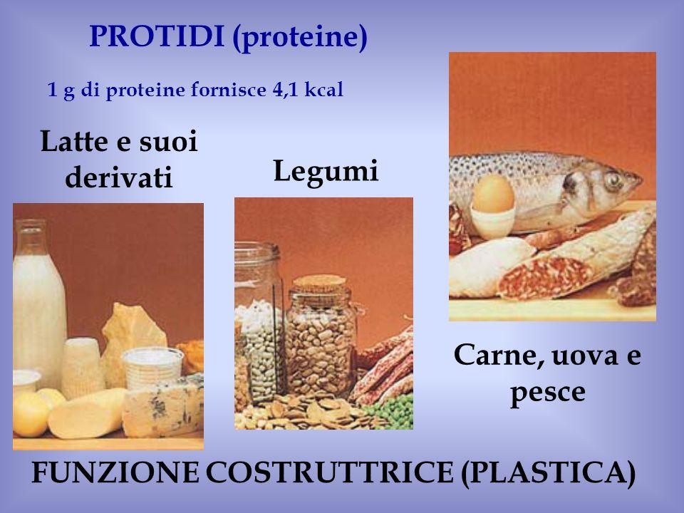 1 g di proteine fornisce 4,1 kcal FUNZIONE COSTRUTTRICE (PLASTICA)