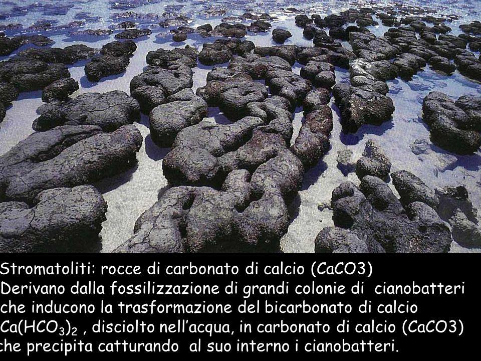 Derivano dalla fossilizzazione di grandi colonie di cianobatteri