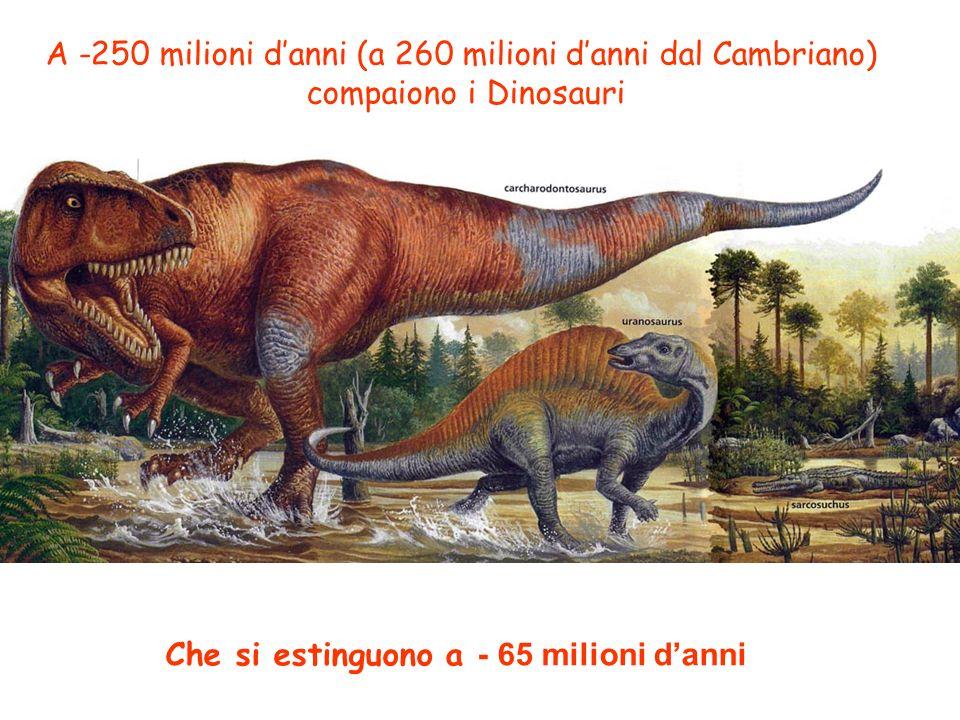 Che si estinguono a - 65 milioni d'anni