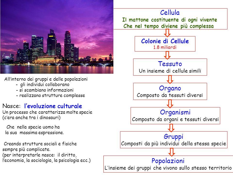 Cellula Tessuto Organo Organismi Gruppi Popolazioni Colonie di Cellule