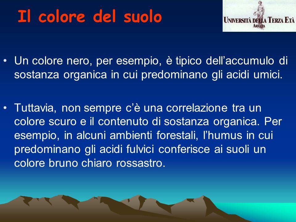 Il colore del suolo Un colore nero, per esempio, è tipico dell'accumulo di sostanza organica in cui predominano gli acidi umici.