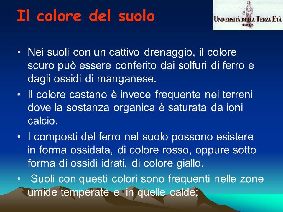 Il colore del suolo Nei suoli con un cattivo drenaggio, il colore scuro può essere conferito dai solfuri di ferro e dagli ossidi di manganese.