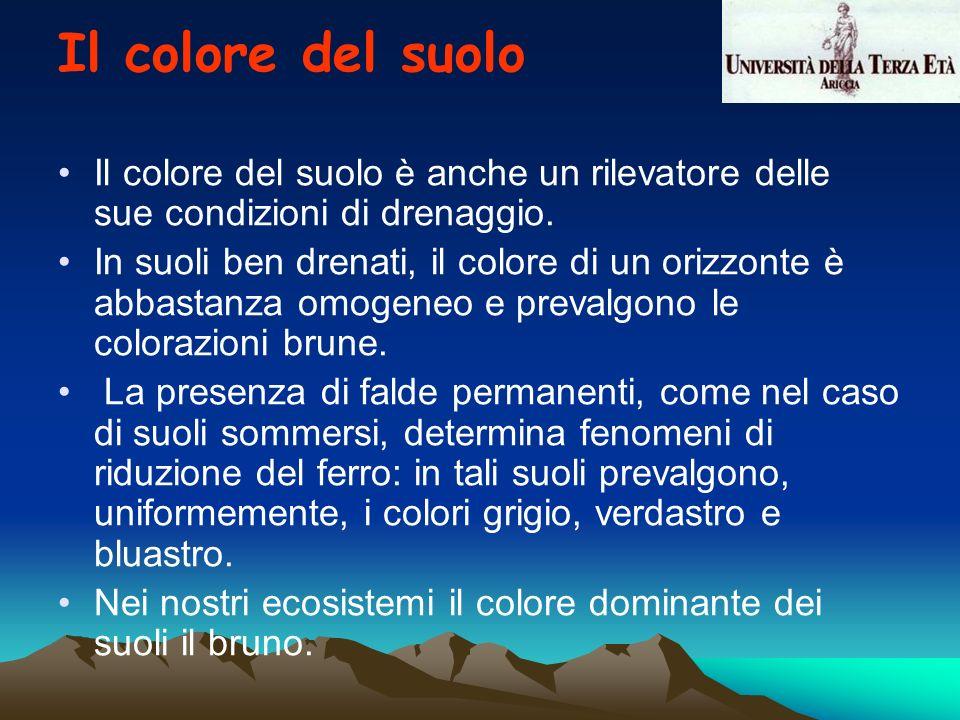 Il colore del suolo Il colore del suolo è anche un rilevatore delle sue condizioni di drenaggio.
