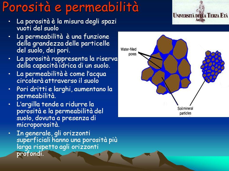 Porosità e permeabilità