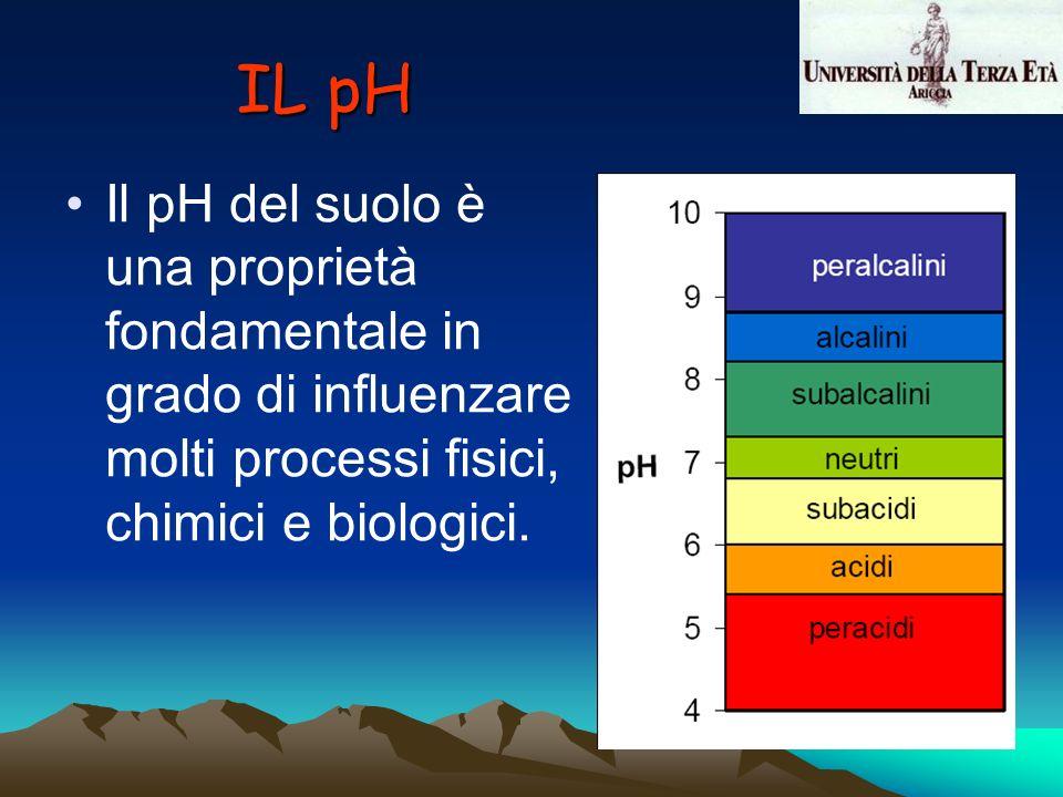 IL pH Il pH del suolo è una proprietà fondamentale in grado di influenzare molti processi fisici, chimici e biologici.