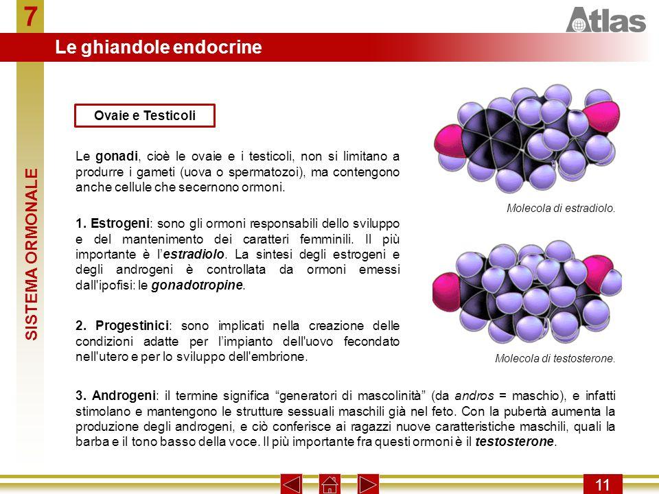 7 Le ghiandole endocrine SISTEMA ORMONALE 11 Ovaie e Testicoli