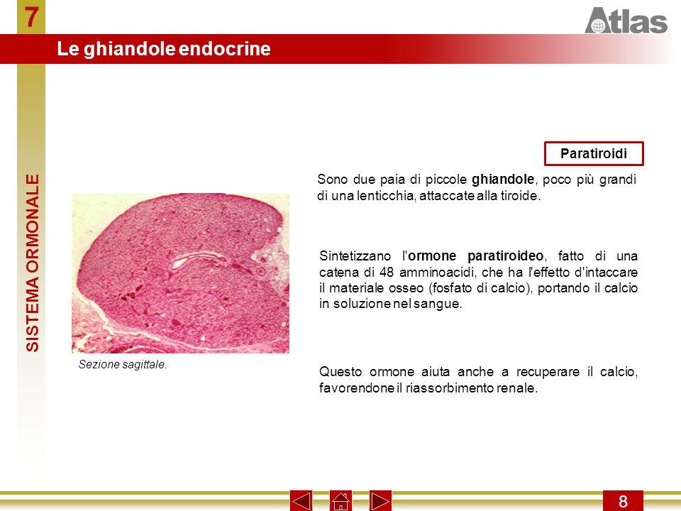 7 Le ghiandole endocrine SISTEMA ORMONALE 8 Paratiroidi