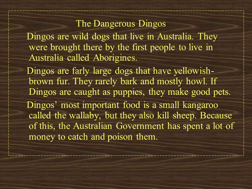 The Dangerous Dingos