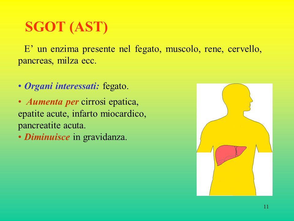 SGOT (AST) E' un enzima presente nel fegato, muscolo, rene, cervello, pancreas, milza ecc. Organi interessati: fegato.