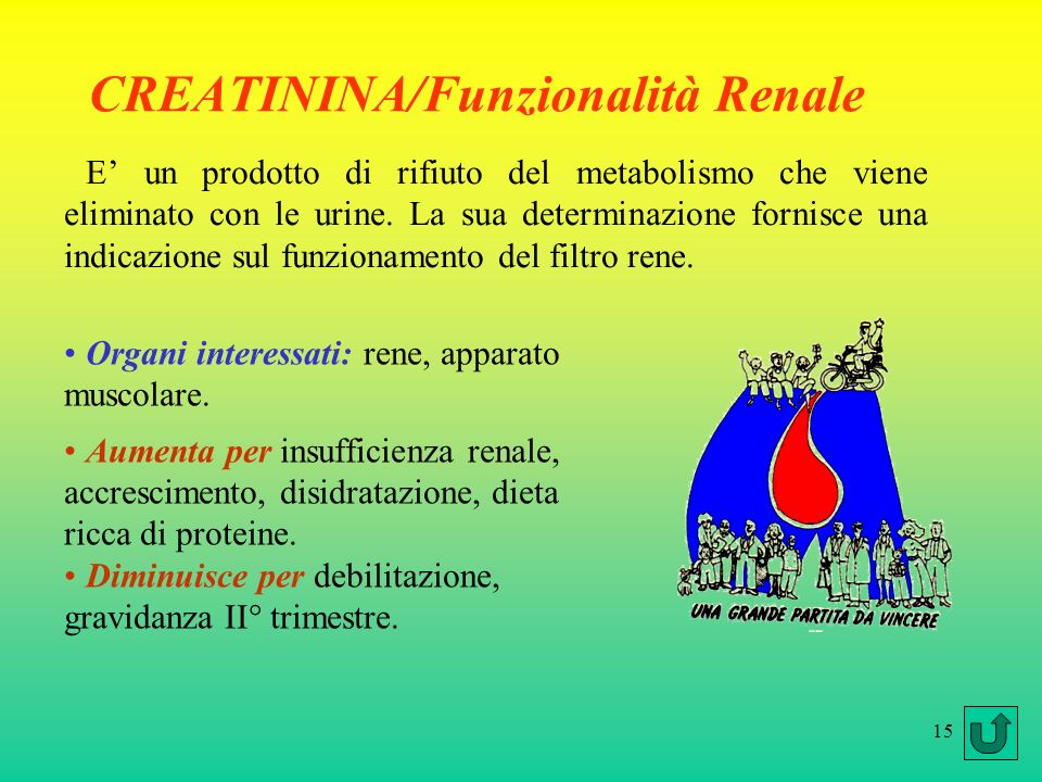 CREATININA/Funzionalità Renale