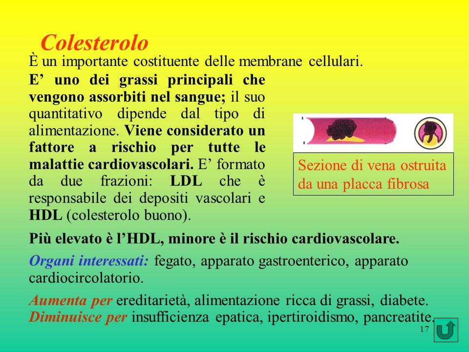 Colesterolo È un importante costituente delle membrane cellulari.