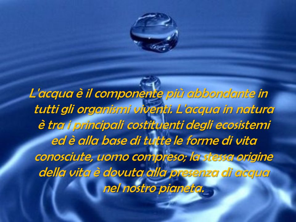 L acqua è il componente più abbondante in tutti gli organismi viventi