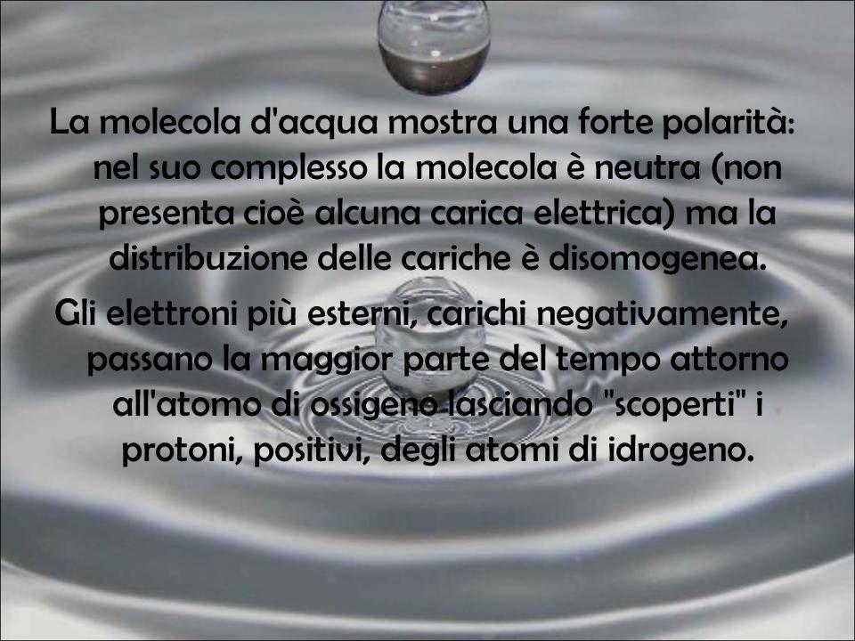 La molecola d acqua mostra una forte polarità: nel suo complesso la molecola è neutra (non presenta cioè alcuna carica elettrica) ma la distribuzione delle cariche è disomogenea.