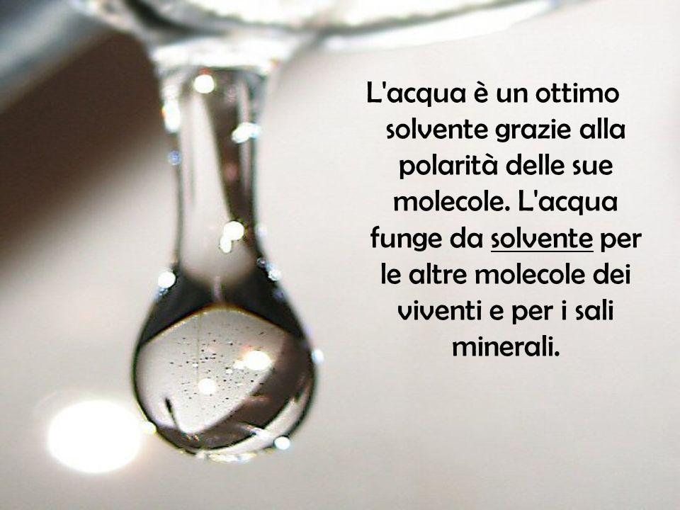 L acqua è un ottimo solvente grazie alla polarità delle sue molecole