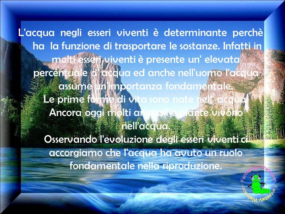L acqua negli esseri viventi è determinante perchè ha la funzione di trasportare le sostanze.