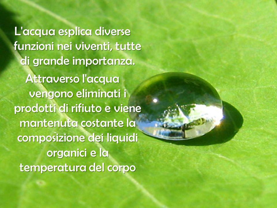 L acqua esplica diverse funzioni nei viventi, tutte di grande importanza.