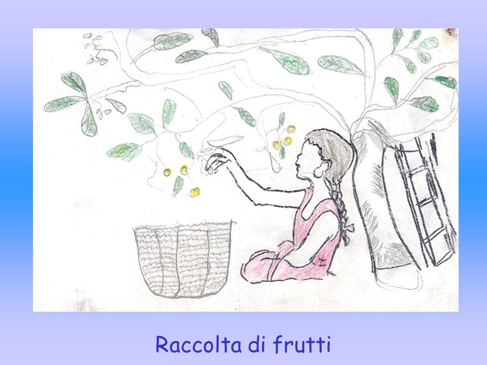 Raccolta di frutti