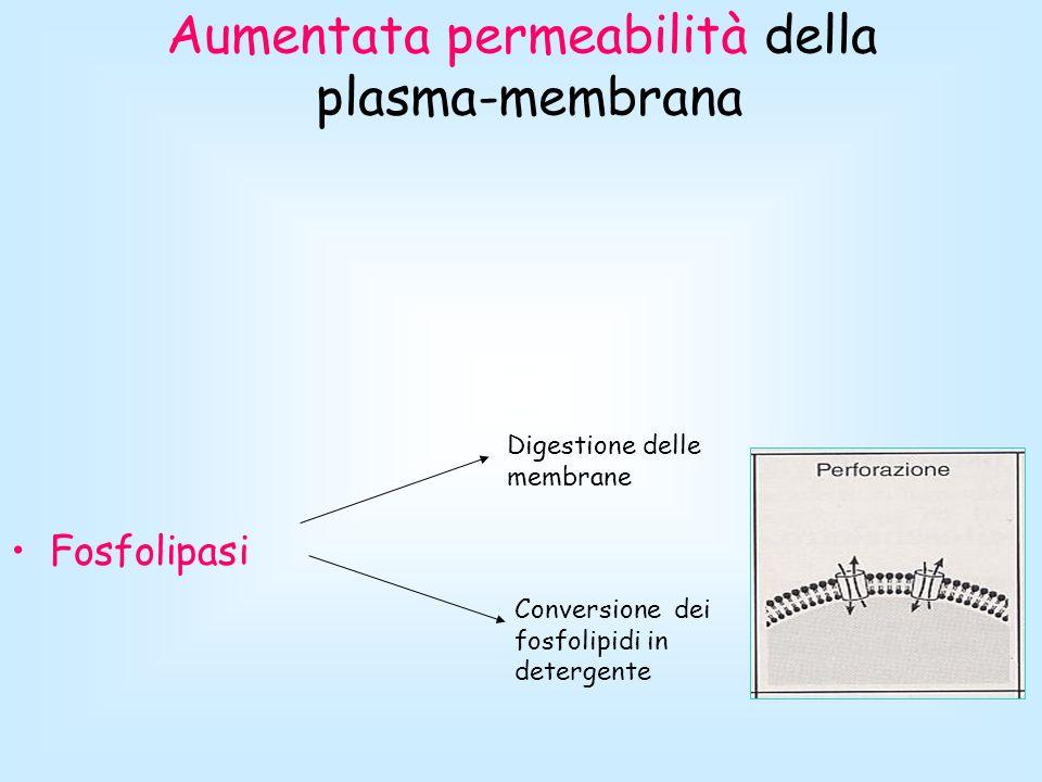 Aumentata permeabilità della plasma-membrana