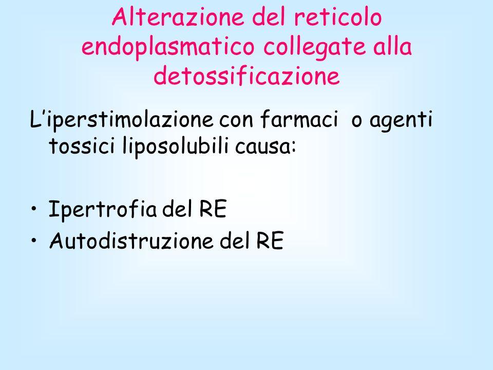 Alterazione del reticolo endoplasmatico collegate alla detossificazione
