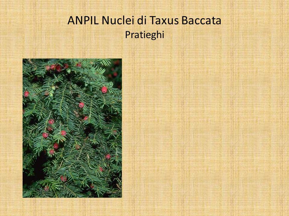 ANPIL Nuclei di Taxus Baccata Pratieghi