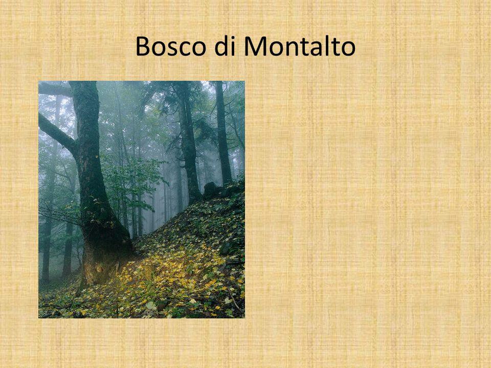 Bosco di Montalto