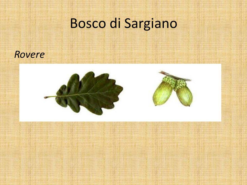Bosco di Sargiano Rovere