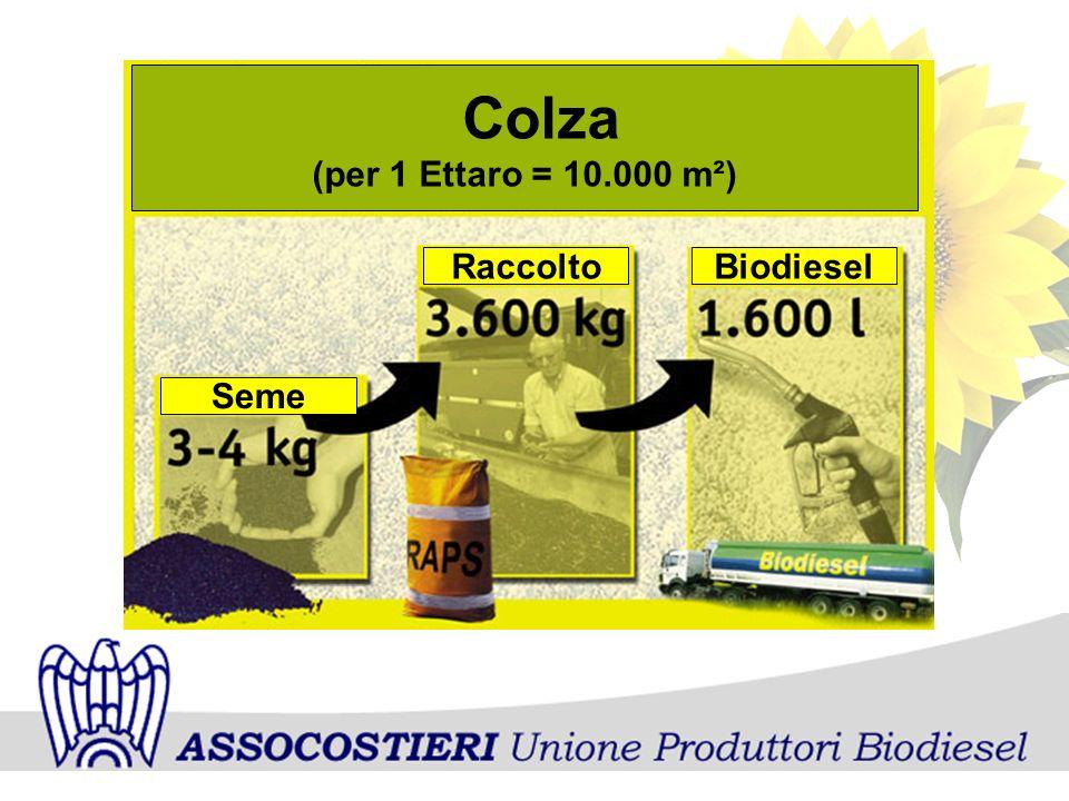 Colza (per 1 Ettaro = 10.000 m²) Seme Raccolto Biodiesel