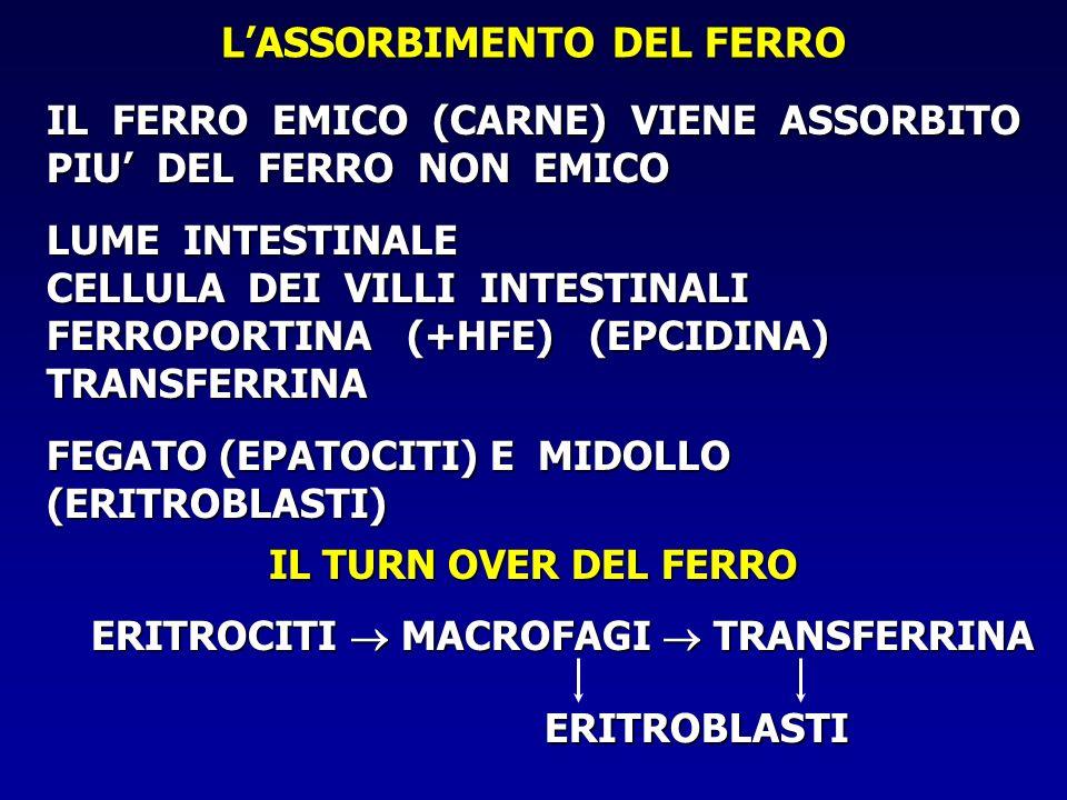 L'ASSORBIMENTO DEL FERRO ERITROCITI  MACROFAGI  TRANSFERRINA