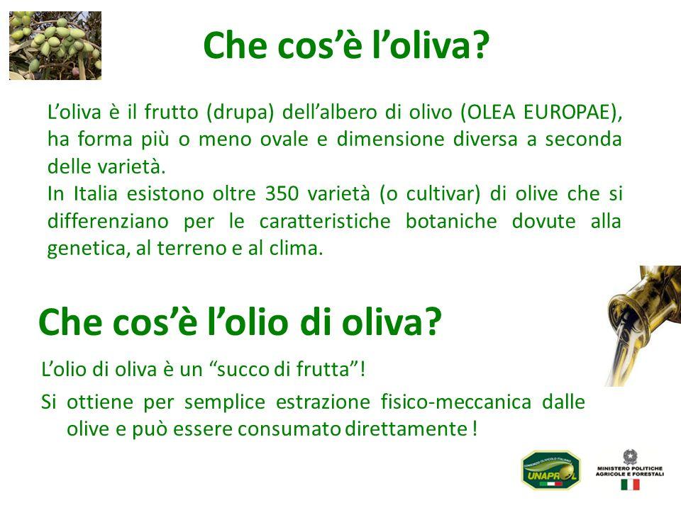 Che cos'è l'olio di oliva