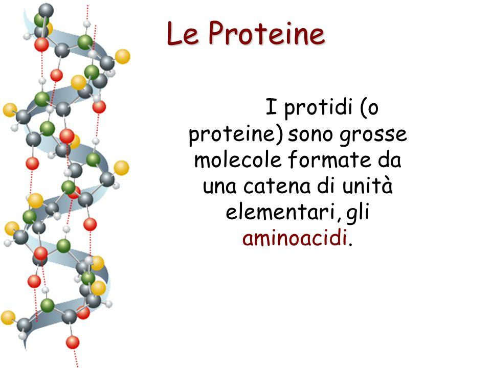 Le Proteine I protidi (o proteine) sono grosse molecole formate da una catena di unità elementari, gli aminoacidi.