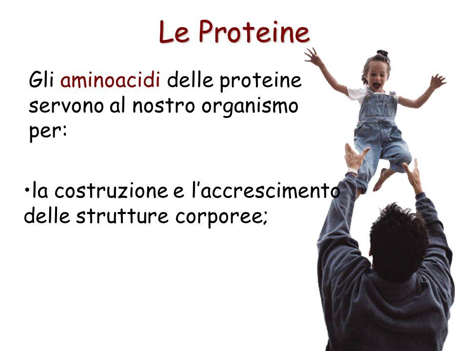 Le Proteine Gli aminoacidi delle proteine servono al nostro organismo per: la costruzione e l'accrescimento delle strutture corporee;