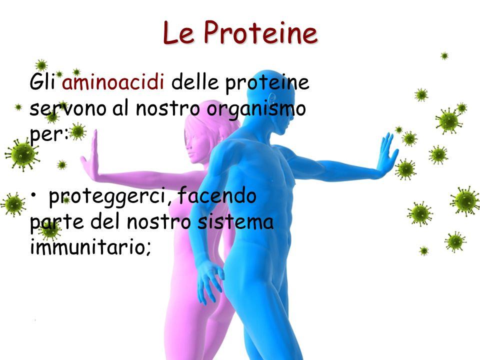 Le Proteine Gli aminoacidi delle proteine servono al nostro organismo per: proteggerci, facendo parte del nostro sistema immunitario;