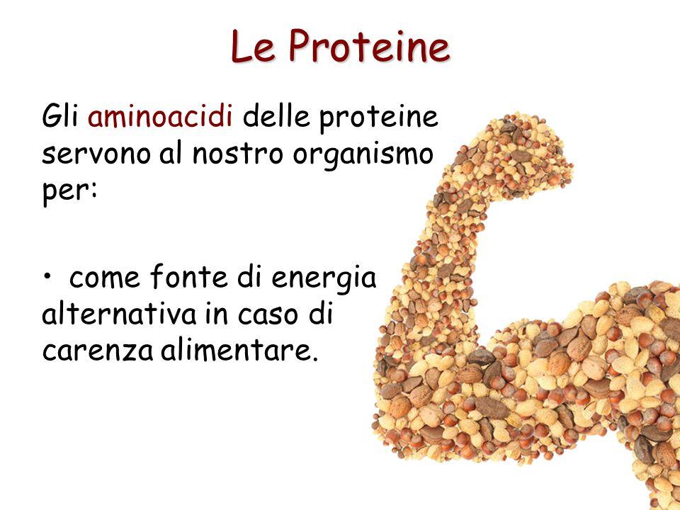 Le Proteine Gli aminoacidi delle proteine servono al nostro organismo per: come fonte di energia alternativa in caso di carenza alimentare.