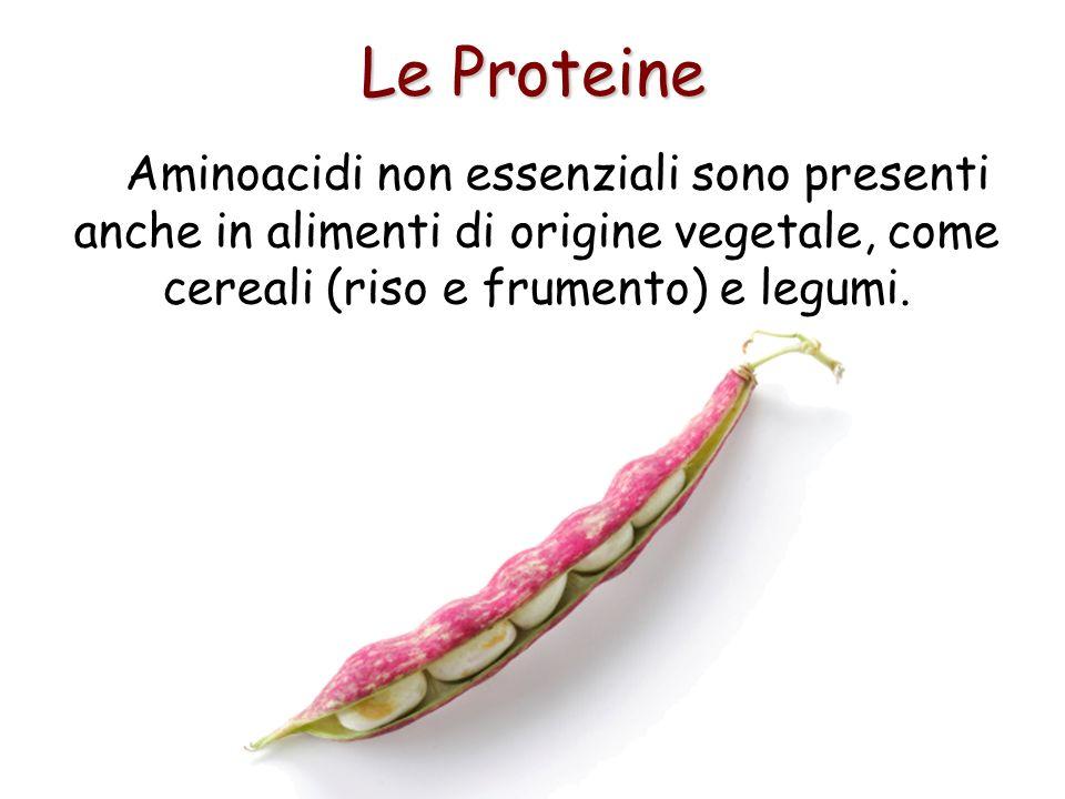Le Proteine Aminoacidi non essenziali sono presenti anche in alimenti di origine vegetale, come cereali (riso e frumento) e legumi.