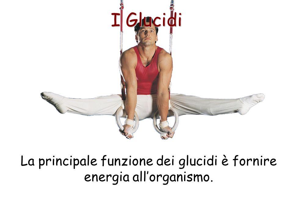 La principale funzione dei glucidi è fornire energia all'organismo.