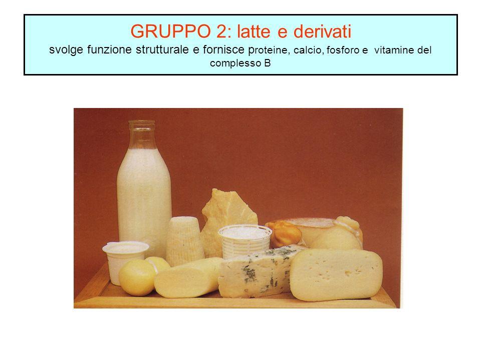 GRUPPO 2: latte e derivati svolge funzione strutturale e fornisce proteine, calcio, fosforo e vitamine del complesso B